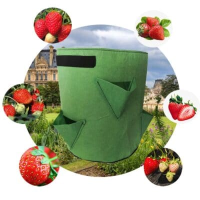 Strawberry Growing Bag,strawberry