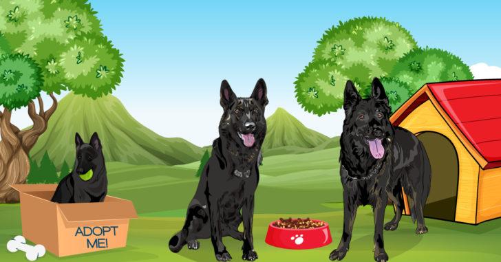 Black German,Black German Shepherd,German Shepherd